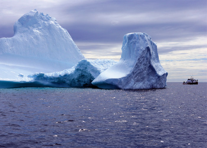 Memorable Iceberg Watching